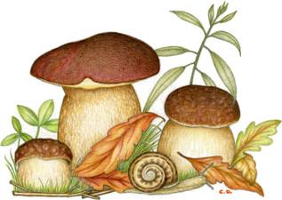 funghi porcini a stregna